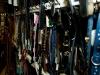dierenwinkel_haarlem-2